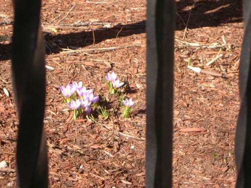 first flowers of spring