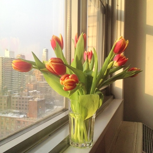 Tulips br