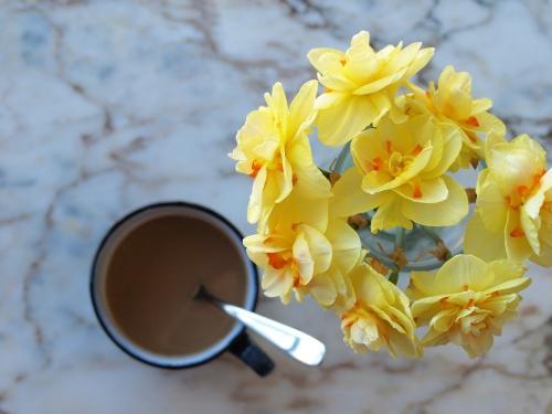 Dutchmill daffodils