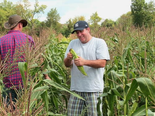 Chef Carmen picking corn at Sycamore Farms